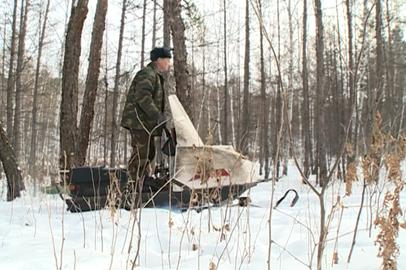 Охотоведы отмечают увеличение численности лося и изюбря  в амурских лесах
