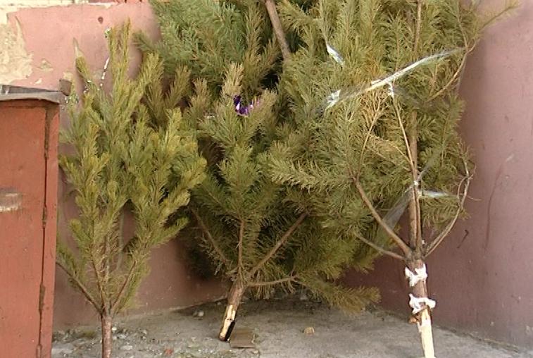 Массового избавления от новогодних елок ожидают коммунальщики
