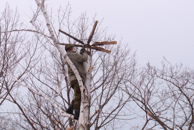 Амурские ученые готовятся к возвращению аистов с мест зимовки