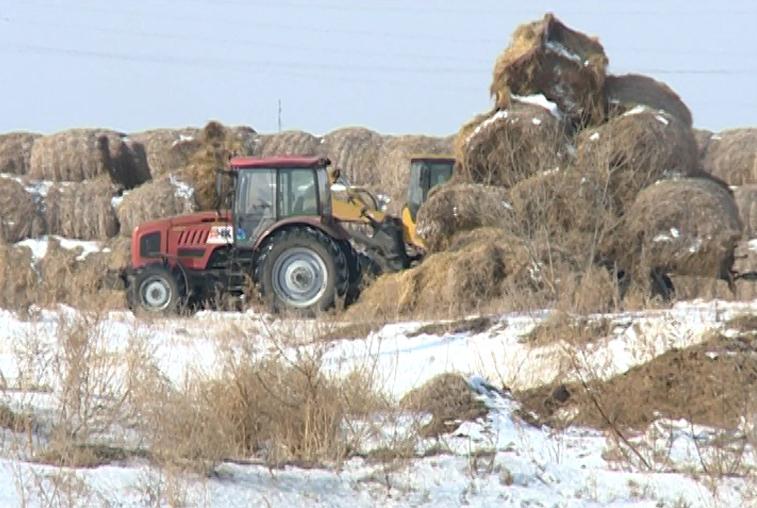 На севере Приамурья возрос спрос на бесплатные гектары