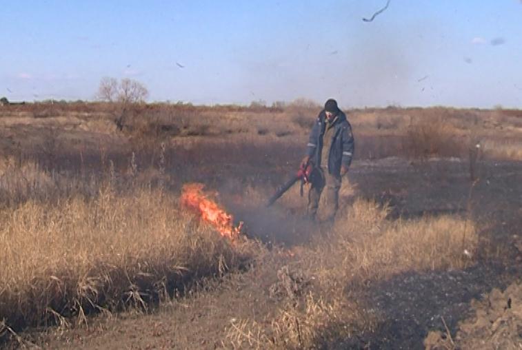 Профилактические отжиги сухой растительности начались в Приамурье