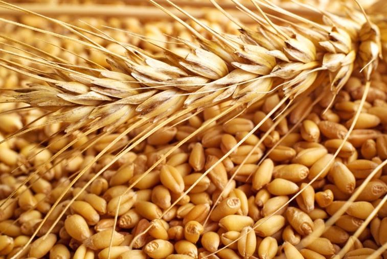 Производство зерновых культур будут стимулировать в Приамурье