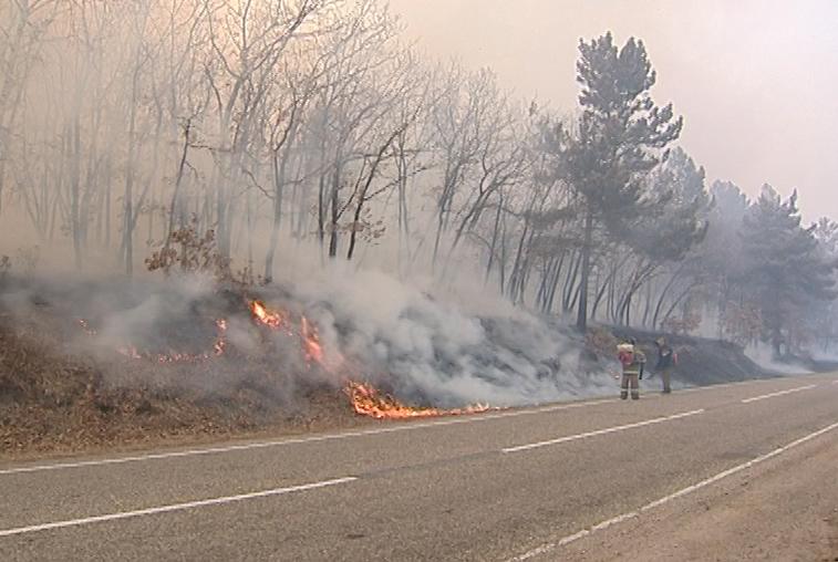 К борьбе с природными пожарами в Приамурье подключились силы федеральной лесоохраны