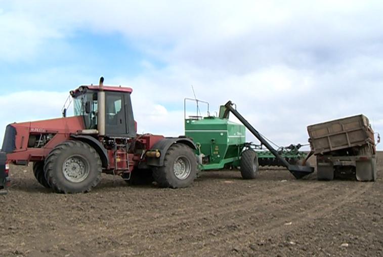 Севу ранних зерновых в Приамурье не мешают капризы погоды