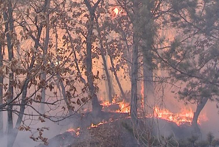Режим ЧС из-за пожаров введён в Шимановском и Свободненском районах