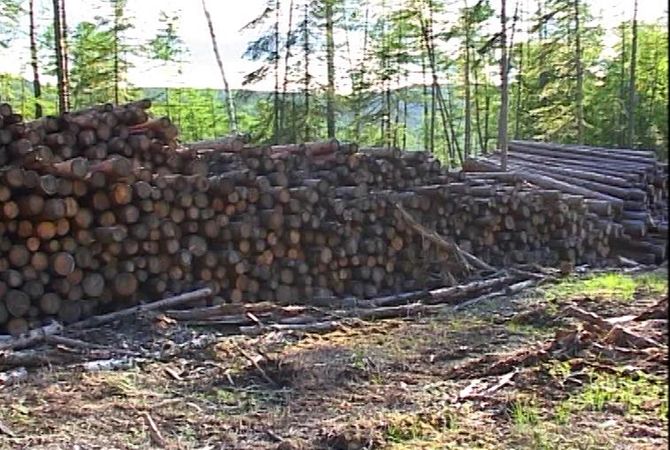Для освоения лесных ресурсов Дальнего Востока отбирают инвесторов