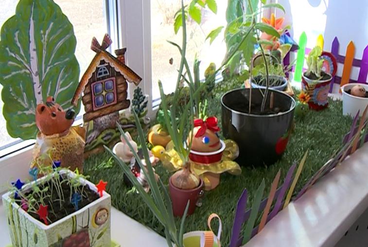 Подготовка к дачному сезону: Амурские огородники озаботились качеством семян