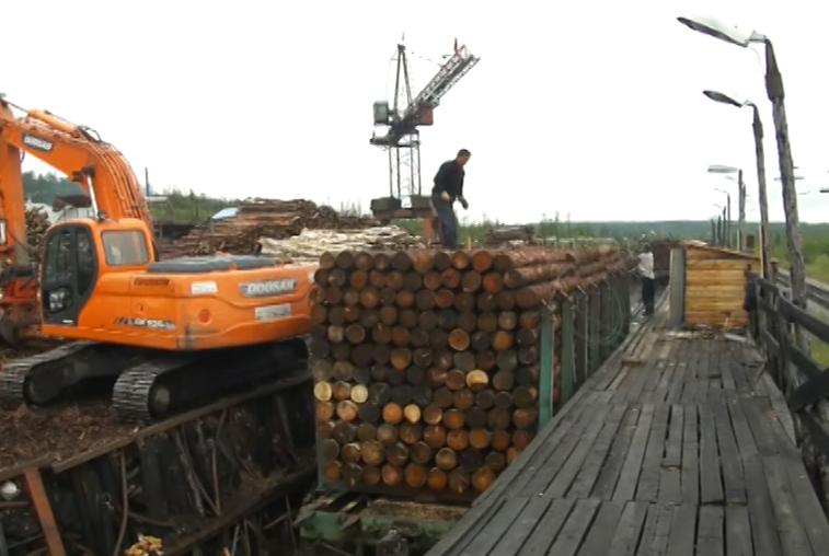 Запретить вырубку липы в лесах Дальнего Востока призывают экологи