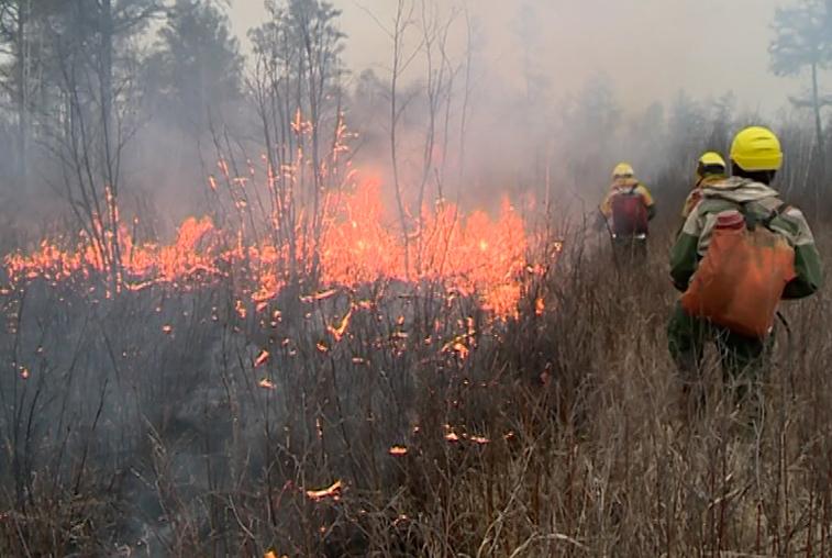 В Приамурье за выходные ликвидировано восемь природных пожаров