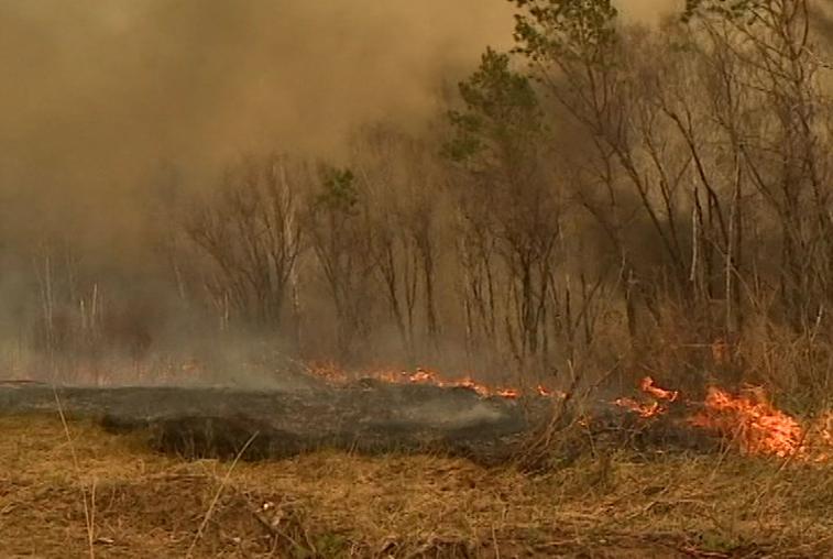 Природные пожары в Приамурье продолжаются: наиболее сильные – в Зейском районе