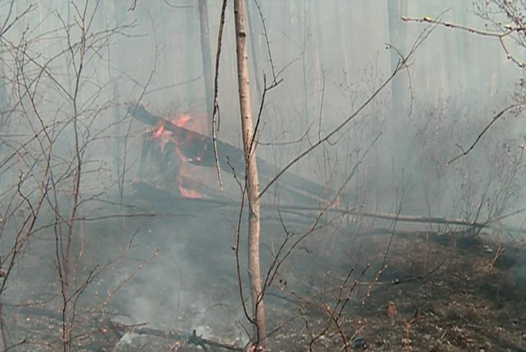 С надеждой на дожди: леса пяти районов Приамурья под особым контролем пожарных