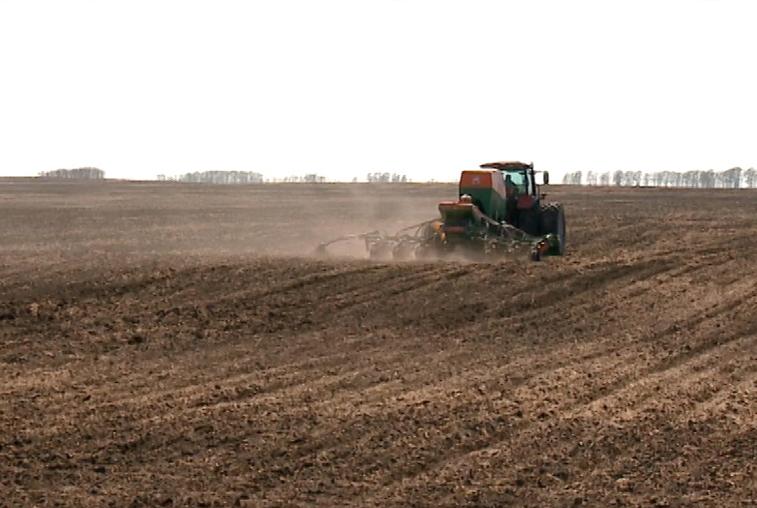 Расширять площади посева кукурузы в Приамурье не спешат