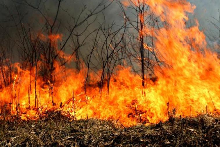 4 пожара вернулись в амурские леса за последние сутки