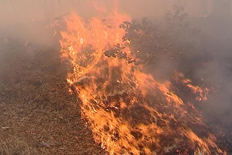 Огонь не утихает: высший класс опасности дан пожарам в Сковородинском районе