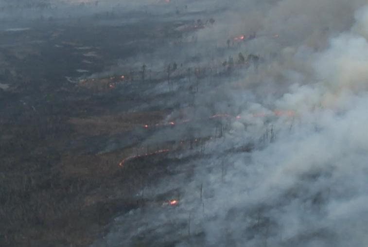 Стабилизировать лесопожарную обстановку в Приамурье удалось специалистам