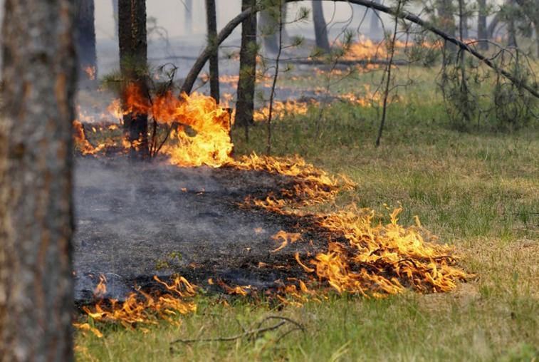 Прошедшие дожди не помогли в тушении природных пожаров на севере Приамурья