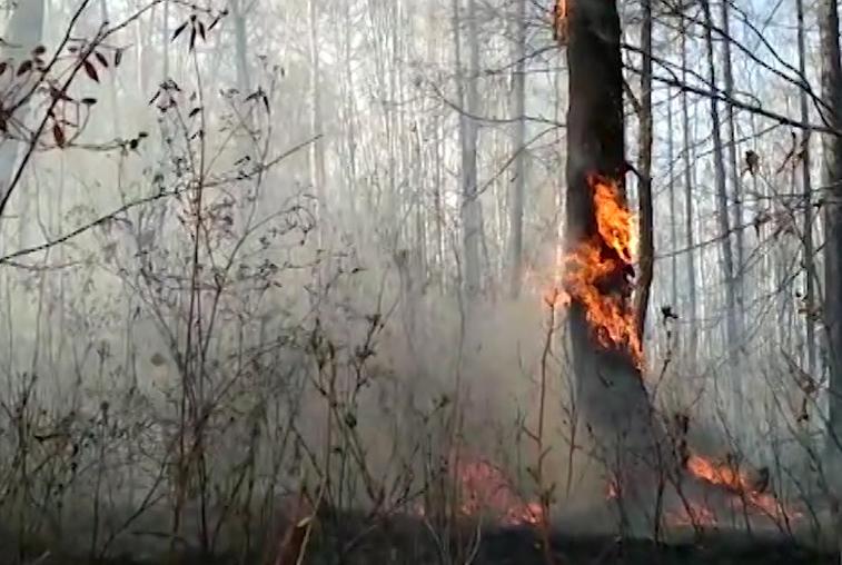 В Приамурье установлены 73 виновника лесных пожаров