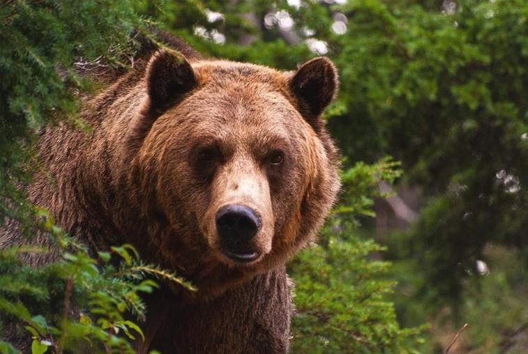 Медведь, вышедший к железной дороге в Тынде, погнался за мужчиной
