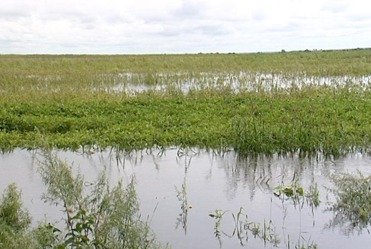 Осадки все же принесли проблемы земледельцам Приамурья