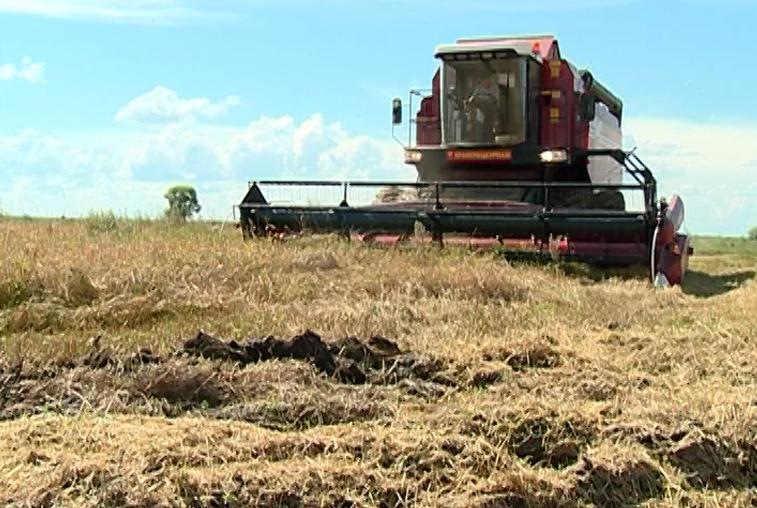 Амурские аграрии пытаются собрать урожай на подтопленных полях