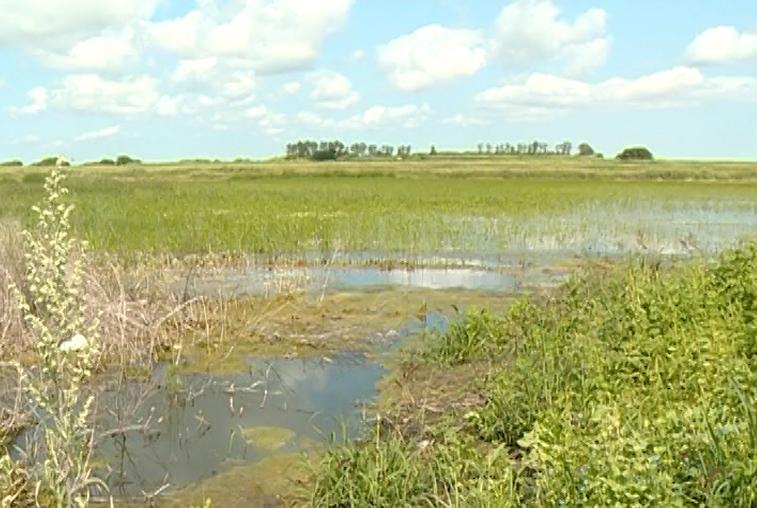 Проблемы с водоотведением просят решить жители села Лозовое Тамбовского района