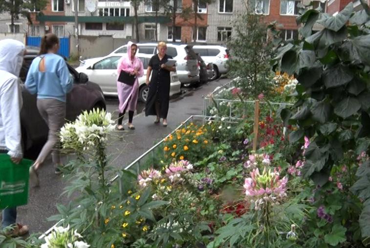 Самый красивый цветущий двор определят в Благовещенске