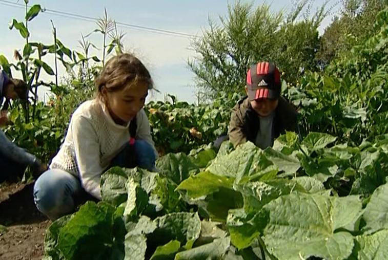Воспитание через труд: ученики Ушумунской школы вырастили урожай