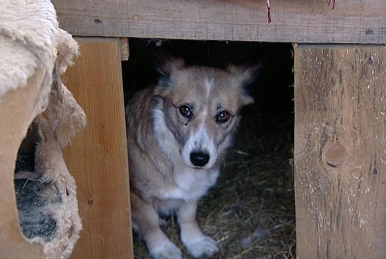 Собаки из благовещенского приюта «Остров спасения» нуждаются в корме