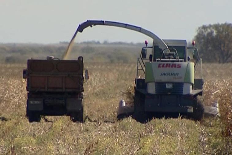 Урожай кормовых культур в Приамурье заметно упал