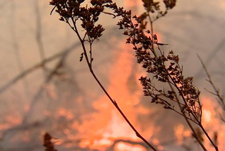 Первый осенний природный пожар зафиксирован в Бурейском районе
