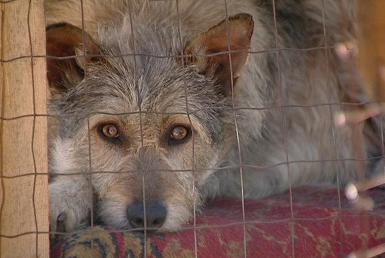 Сбор гуманитарной помощи бездомным животным объявлен в Благовещенске