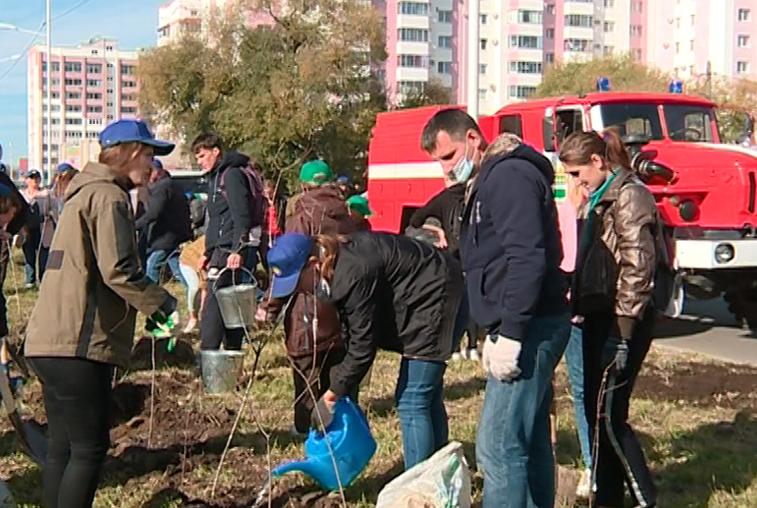 Благовещенцы поддержали всероссийскую акцию по высадке деревьев