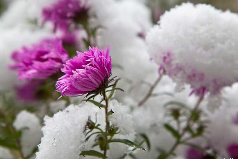 Первый осенний снег пошел в Приамурье