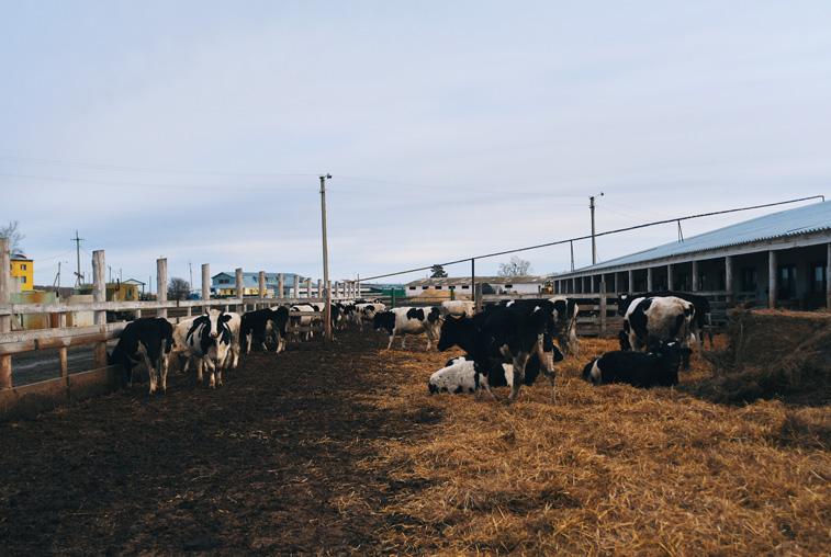 Животноводческий комплекс КФХ «Орта» пополнит список приоритетных инвестпроектов