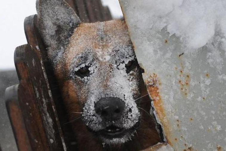 Крепкие морозы: температура в Приамурье на 5-7 градусов ниже нормы