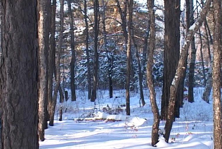 На сохранение лесного фонда Приамурье получит 500 миллионов рублей