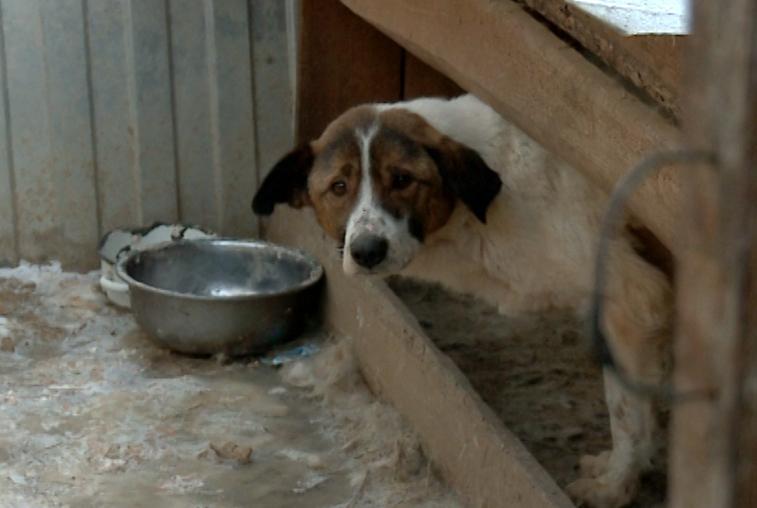 Скандально известный приют для собак «Дружок» закрыл суд