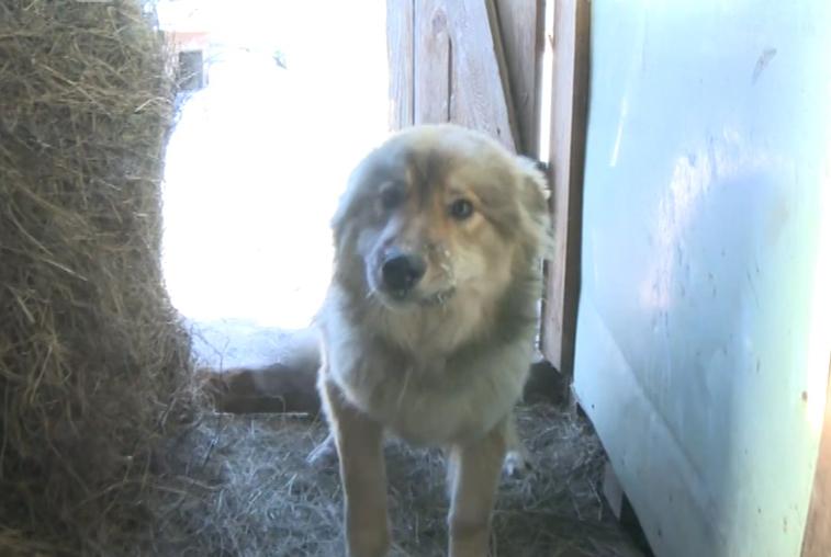 Выжившим собакам из приюта «Дружок» окажет помощь областная ветстанция