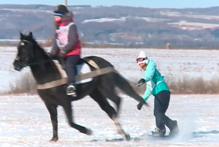 Необычный спорт: благовещенских лыжников буксировали лошади