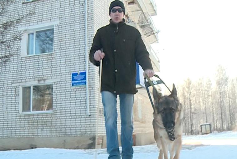 В помощь незрячим: как собаки-поводыри меняют жизнь потерявших зрение амурчан