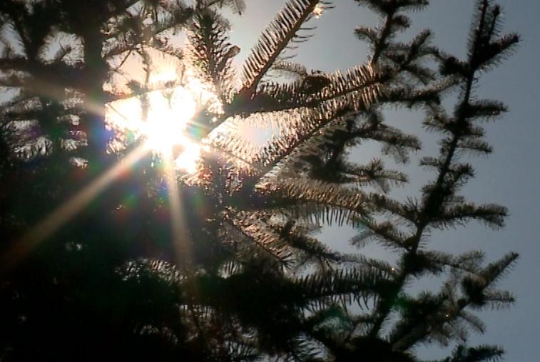Минувшие выходные оказались непривычно теплыми для этого времени года