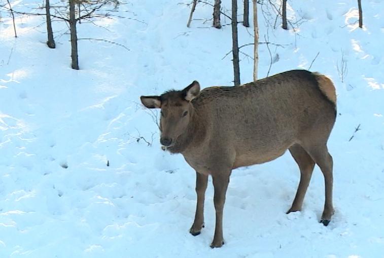 Предложения по развитию охотничьих хозяйств принимают в амурском управлении животного мира