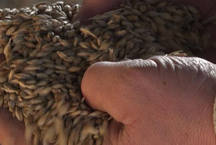 Как амурские аграрии готовят семенной материал к посевной кампании