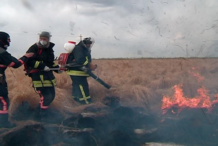 Волонтеры «Гринпис» вышли на борьбу с лесными пожарами в Приамурье