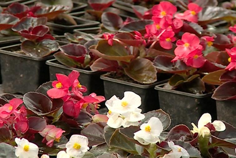 Улицы Благовещенска летом украсят более 420 тысяч цветов