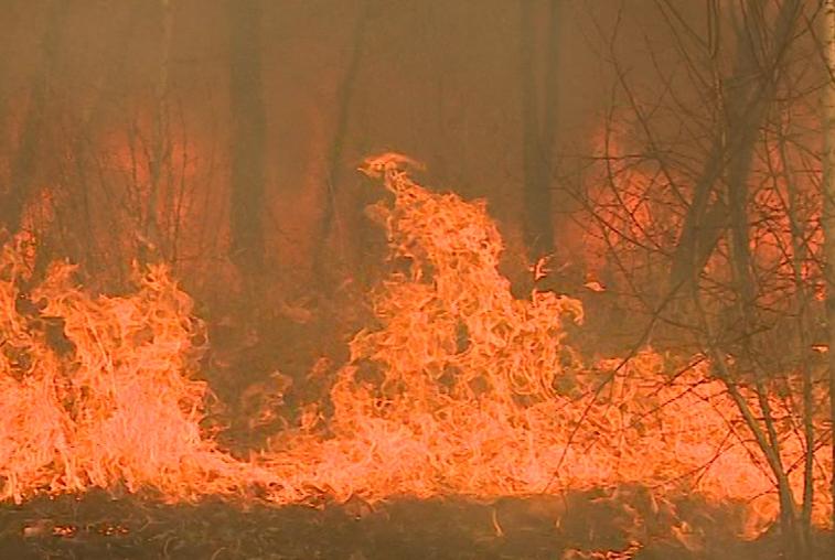 Крупный пожар в тайге Сковородинского района тушат третий день