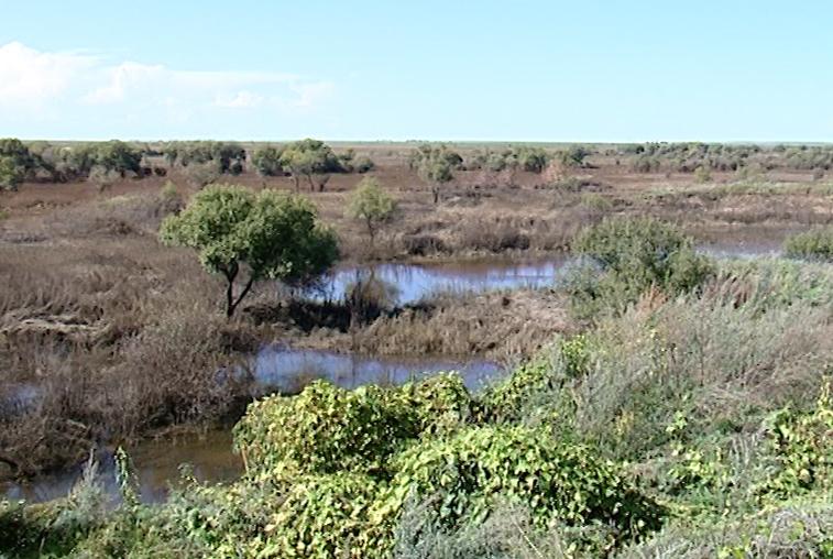 Четыре амурских скотомогильника может подтопить в результате паводка