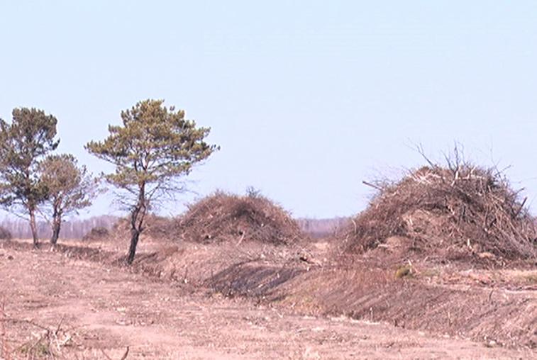 На возрождение брошенных амурских пашен выделено более 170 млн руб.