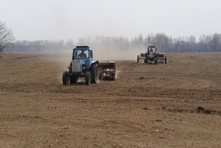Ранними зерновыми засеяна уже пятая часть отведенных амурских земель
