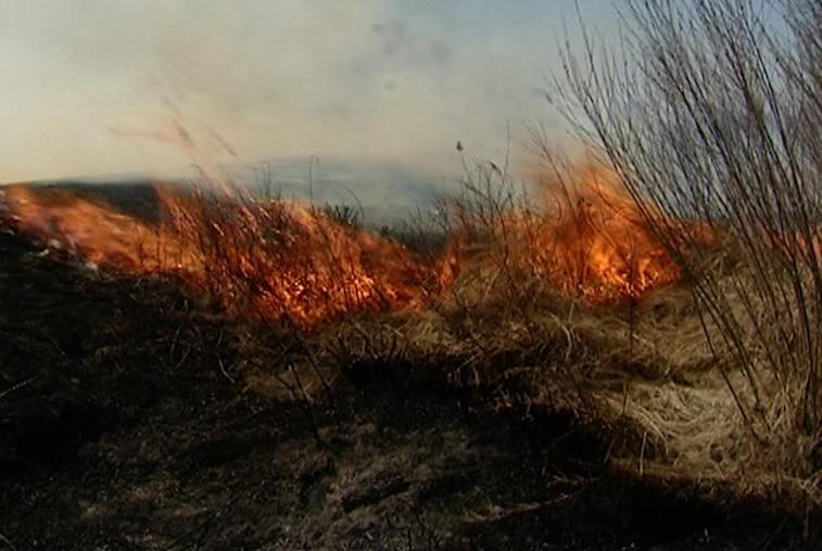 Поселки Заречный и Зазейский едва не пострадали от рук поджигателей